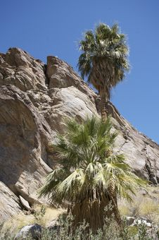 Free Indian Reservation Palm Springs Royalty Free Stock Photography - 7820437