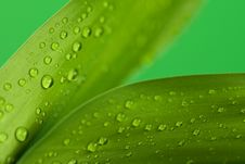 Free Two Leaves Stock Images - 7820564