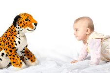 Free Baby Versus Tiger Stock Photos - 7821443