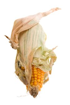 Free Dried Corn Isolated Stock Photos - 7822013