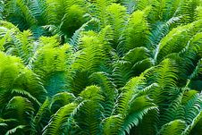 Free Ferns Stock Images - 7822014