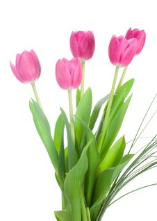 Free Five Pink Tulips Bouquet Royalty Free Stock Photography - 7822047