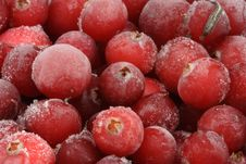 Free Frozen Cranberry. Royalty Free Stock Images - 7822159