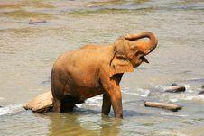 Free Elephant Royalty Free Stock Photos - 7822258