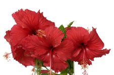 Free Red Flowers Royalty Free Stock Image - 7824906
