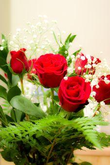 Free Roses Stock Photo - 7825290