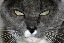 Annoyed Cat Royalty Free Stock Photography