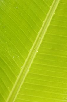 Free Green Leaf Stock Image - 7825581