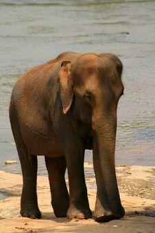 Free Elephant Stock Photography - 7826332
