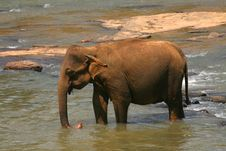 Free Elephant Stock Image - 7826351