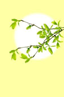 Free Spring Branch Frame Royalty Free Stock Photos - 7826958