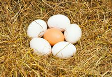 Six Eggs Royalty Free Stock Photos