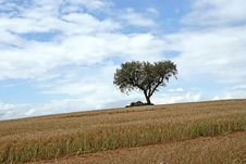 Free Alentejo Royalty Free Stock Photography - 7827607