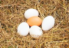 Free Few Eggs Stock Image - 7828051
