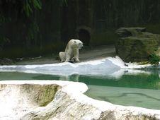 Free Polar Royalty Free Stock Images - 7828319
