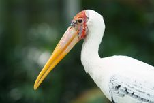 Free Painted Stork Stock Image - 7828341