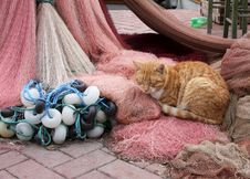 Free Cat Sleeping On The Fishing Nets Royalty Free Stock Images - 7828419