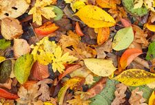Free Autumn Leaves Royalty Free Stock Photography - 7829077