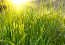 Free Green Grass Meadow Royalty Free Stock Photos - 7829168