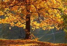 Free Autumn In The Park Royalty Free Stock Photo - 7829415