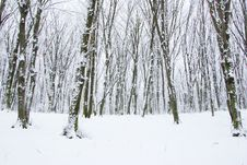 Free Winter Forest Stock Images - 7829714