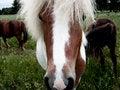 Free Horse 01 Royalty Free Stock Photo - 7831885