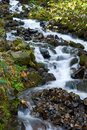 Free A Stream In The Columbia River Gorge Stock Images - 7838404
