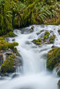 Free A Stream In The Forest Close Up. Royalty Free Stock Photos - 7838448