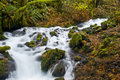 Free Small Creek In The Gorge Royalty Free Stock Images - 7838449