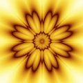 Free Yellow And Orange Flower Stock Images - 7838924