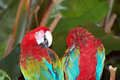 Free Macaw Parrots Stock Photography - 7839252