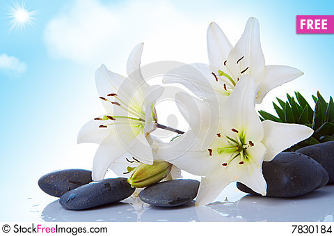 Free Madonna Lily Stock Images - 7830184