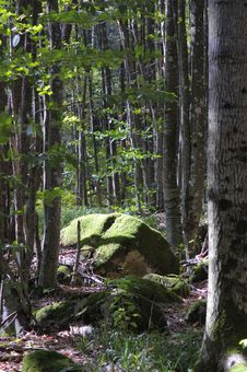 Free Green Moss On The Big Rock. Royalty Free Stock Photos - 7830388