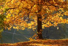 Free Autumn In The Park Royalty Free Stock Images - 7830599