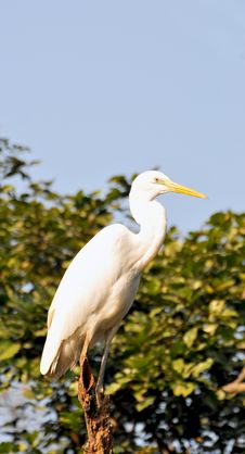 Free Heron Stock Photography - 7830612