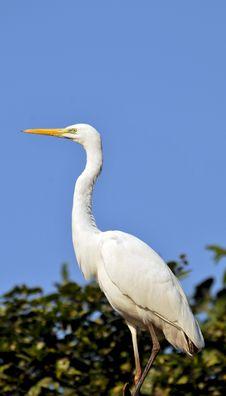 Free Heron Stock Images - 7830714