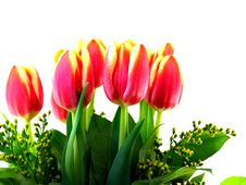 Free Tulips Royalty Free Stock Images - 7830779