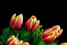 Free Tulips Royalty Free Stock Image - 7830806