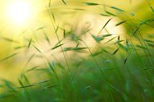 Free Green Grass Stock Photos - 7830843