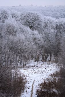 Free Winter Forest Stock Photos - 7830853