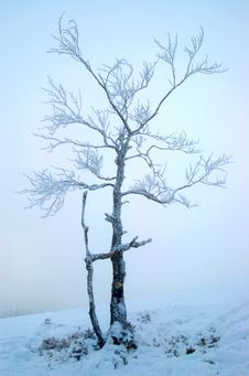 Free Winter Tree Stock Photo - 7831030