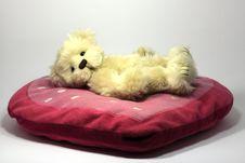 Valentines Teddy Bear Royalty Free Stock Image