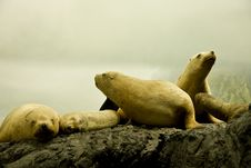 Free White Seals On Rock Stock Photography - 7831042