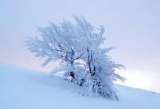 Free Winter Tree Stock Photography - 7831812