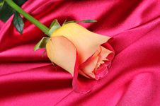 Free Rose Stock Photos - 7832893