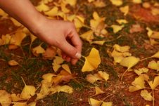 Free Leaves Everywhere Stock Images - 7833964
