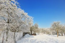 Free Czech Republic Garden In Winter Time Stock Photos - 7833993