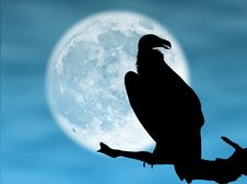 Free Eagle In The Moon Stock Photography - 7834332