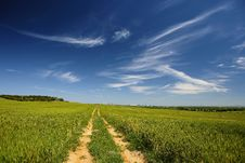 Free Road Path In Beautiful Spring Landscape Royalty Free Stock Images - 7834399