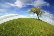Beautiful Spring Landscape With Lonely Tree Royalty Free Stock Photography